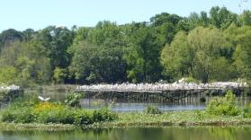 Bird City at Jungle Gardens